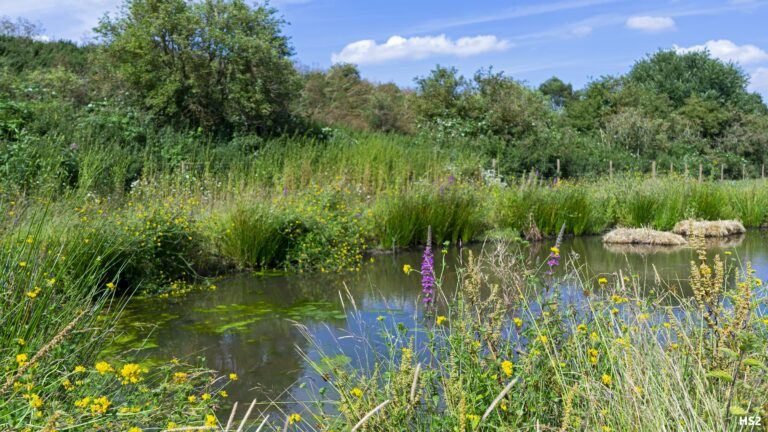 HS2 works boosts environmental consultancy