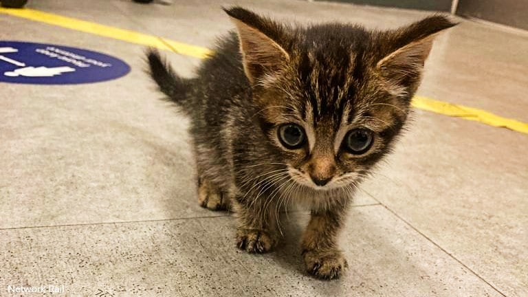 Kitten avoids cat-astrophe after being found on long-distance train